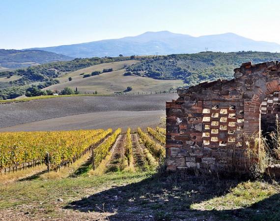 THE MONTECUCCO WINE TRAIL – Cinigiano